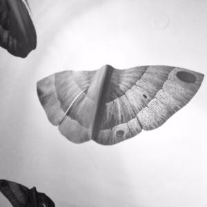 Eva Zoubková, Noční motýl, hliník